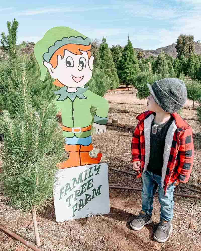 Family Christmas tradition of little boy at christmas tree farm