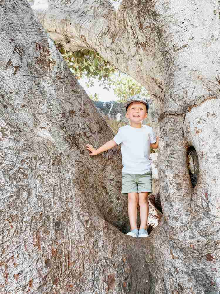 Plan your trip for kids climbing trees