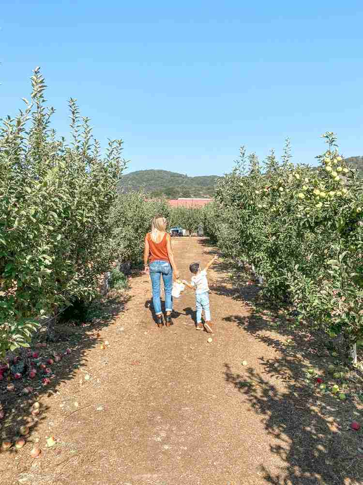 Mother and son walking through an outdoor apple orchard in Julian