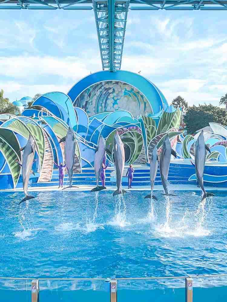 Dolphin Days show at SeaWorld San Diego