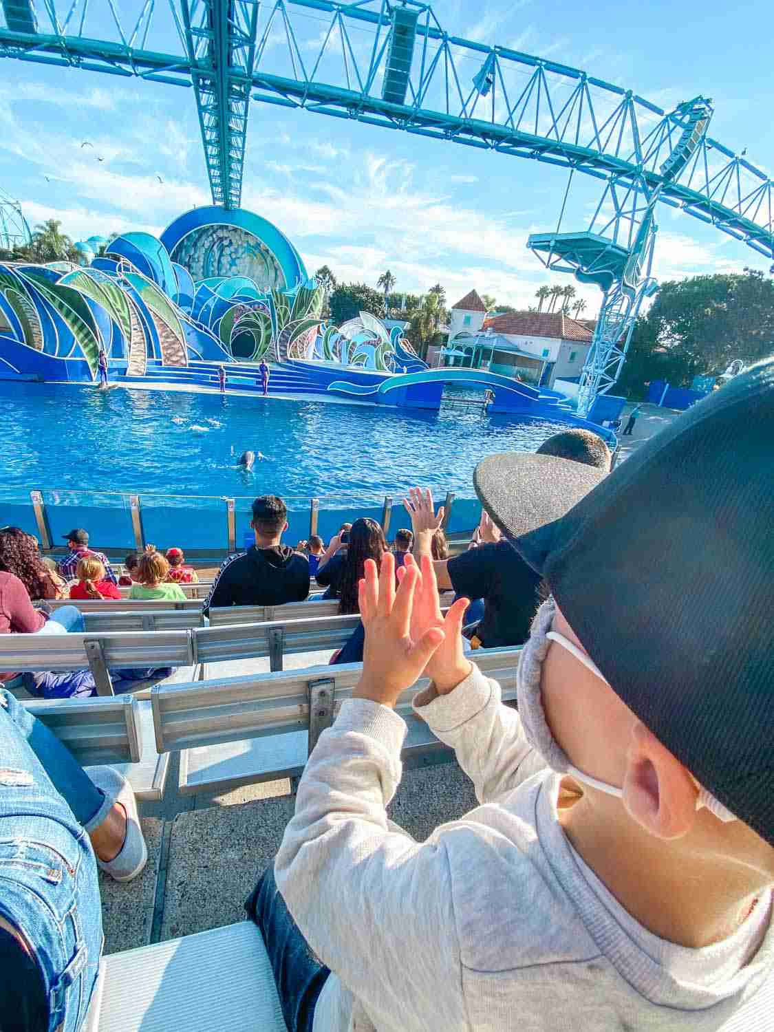 Boy clapping at dolphin show at seaworld