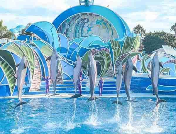 Dolphin Show at SeaWorld San Diego